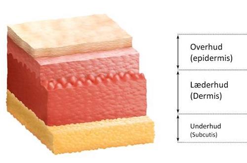 hudens opbygning